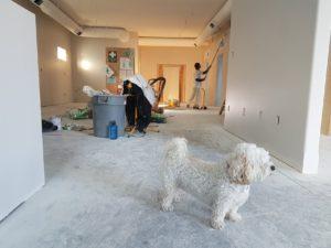 Renovating a basement apartment