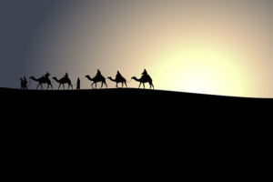 Camels and sunset.