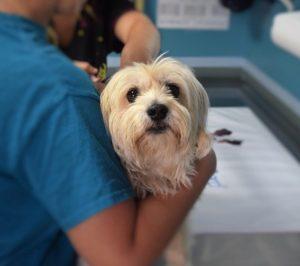 A vet holding a dog.