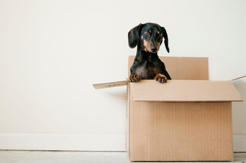 A dog in a cardboard box ready for moving with a pet