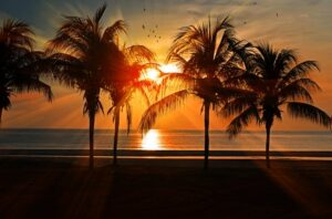 There are some palm trees near the sea during the sunset.